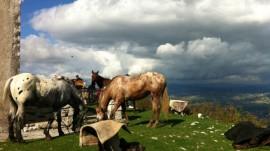 Attività a cavallo presso Le Scuderie del Peschio